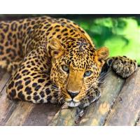 Картина по номерам GX 29772  Грустный леопард 40*50