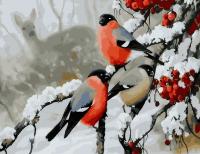 Картина по номерам 40*50 Снегири зимой 21707